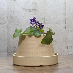 1「新潟県産」雪割草(ゆきわりそう)標準花・濃青系
