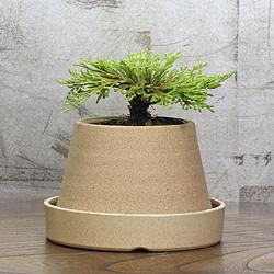 1「伝統園芸植物」巻柏(いわひば)晃明殿・コウメイデン